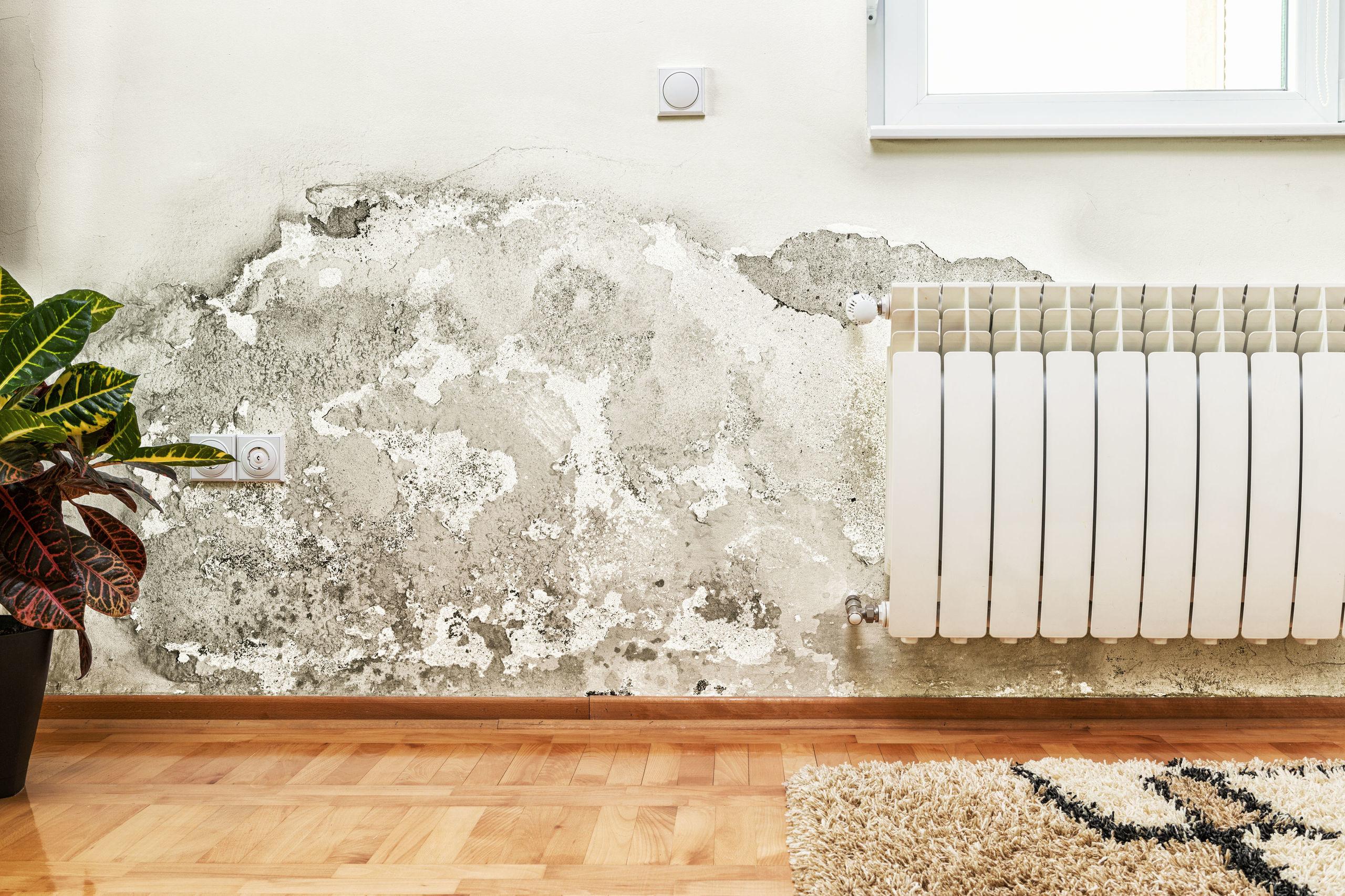 umidità in casa, muffa sui muri, muffa in casa zoccolino