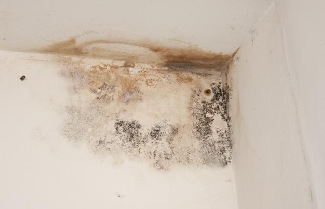 Umidit e muffa in casa da cosa causata e come - Muffa sui muri esterni ...